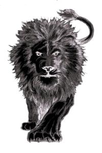 black-lion-2